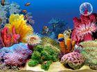 3D Tropical Fish Aquarium II : des poissons tropicaux sur votre ordinateur