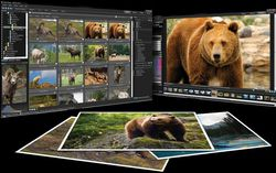 ACDSee Pro Photo Manager 3 screen 2