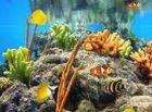 Ecran de veille Aquarium Exotique : profiter d'un joli aquarium sur votre PC