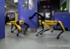 Boston Dynamics : le SpotMini restylé ouvre une porte