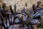 BP-maree-noire