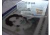 Vers une carte d'identité électronique