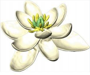 CNRS fleur ancestrale