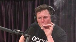 Elon Musk cannabis