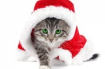 Wallpaper chat de noël : un petit chaton en costume de Noël pour personnaliser son PC