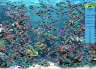 fishie9