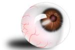 globe-oculaire