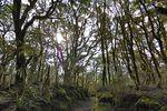 Google-Street-View-Nouvelle-Zelande