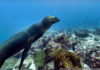 Google Street View : nouvelle imagerie sous-marine
