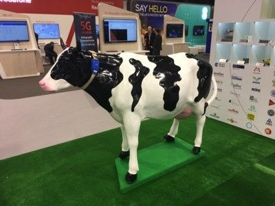 Huawei vaches