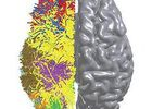 IBM cerveau logo pro