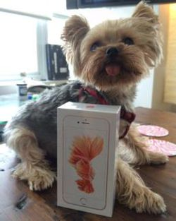 iPhone 6S package