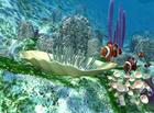nfsunderwaterlife : une vue sous-marine fabuleuse pour votre PC !