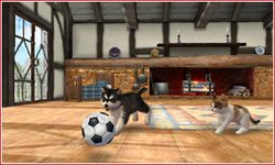 Nintendogs + cats (1)