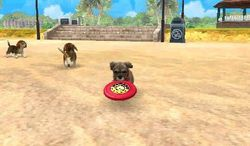 Nintendogs + cats (3)