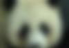 Google Panda : des comparateurs de prix dégustent