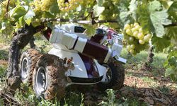 Robot-in-farming--wine-bo-006