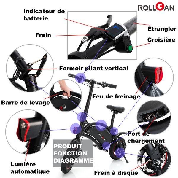 Rollgan-Dolphin-2