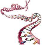 Serial Cloner : modéliser de l'ADN virtuellement