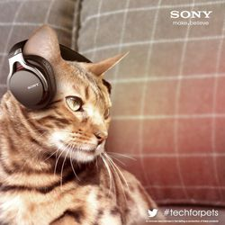 sony chat