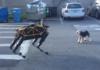 Le robot-chien Spot rencontre le chien Alex