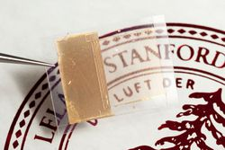 Stanford batterie transparente