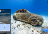 Splendide : Street View étend sa collection sous-marine