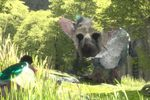 The Last Guardian - 5